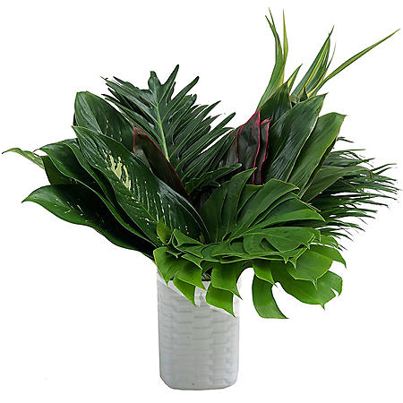 Foliage Amazon Box (60 stems)