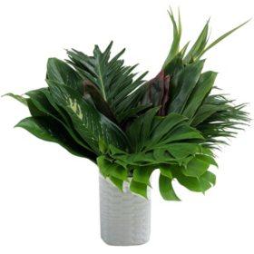 Foliage Amazon Box (60 stems)