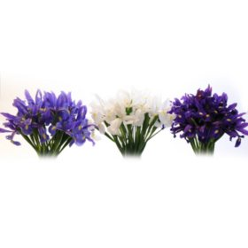 Assorted Iris (Choose 50 or 90 stems)