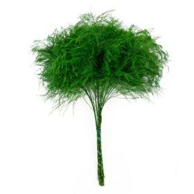 Tree Fern (120 stems)