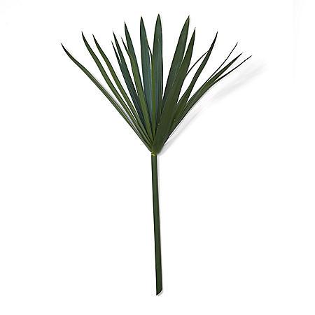 Umbrella Palm (50 stems)