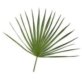 Palmetto Fans (50 stems)