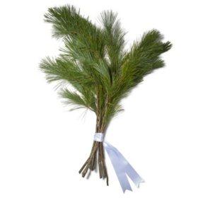 Western White Pine Bouquet Grade (50 stems)