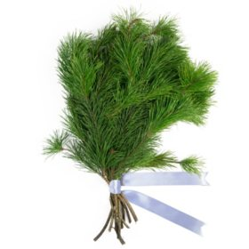 Lodgepole Pine Bouquet Grade (50 stems)