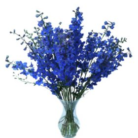 Sea Waltz Delphinium (Choose 40 or 80 stems)