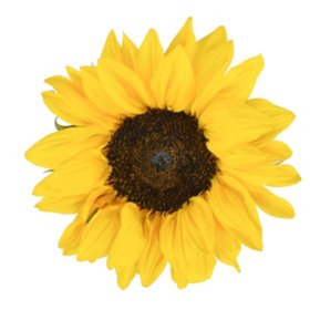 Mini Sunflowers, Assorted Brown and Green Centers (Choose 40 or 90 stems)