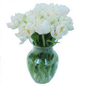 Double Tulip, Casa Blanca (Choose 20 or 40 stems)
