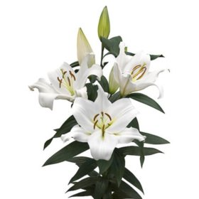 Oriental Trumpet Lily, White (Choose 40 or 90 stems)