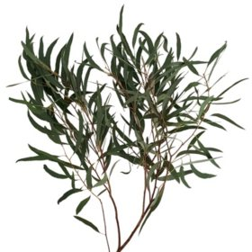 Eucalyptus Willow (40 stems)