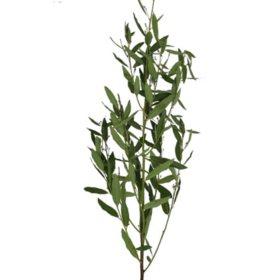 Bay Leaf (40 stems)