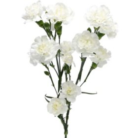 Mini Carnations, White (Choose 50, 100, or 150 stems)