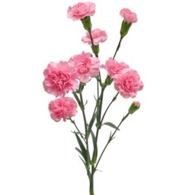 Mini Carnations, Pink (Choose 50, 100, or 150 stems)
