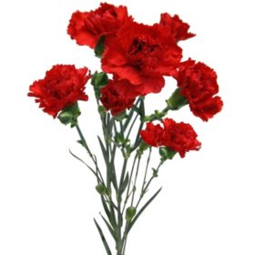 Mini Carnations, Red (Choose 50, 100, or 150 stems)
