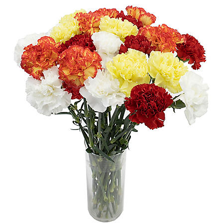 Carnations, Assorted (Choose 50, 100 or 150 stems)