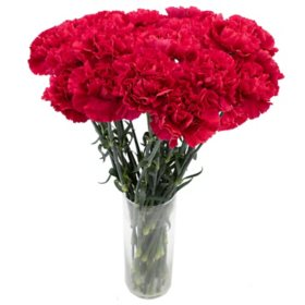 Carnations, Hot Pink (Choose 50, 100 or 150 stems)