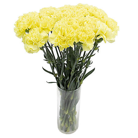 Carnations, Yellow (50, 100 or 150 stems)