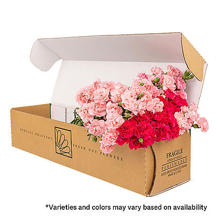 Mini Carnations, Assorted (Choose 50, 100 or 150 stems)