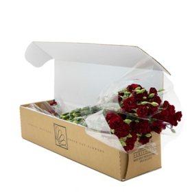 Mini Carnations, Burgundy (Choose 50, 100 or 150 stems)