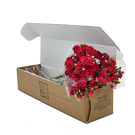 Mini Carnations, Hot Pink (Choose 50, 100 or 150 stems)