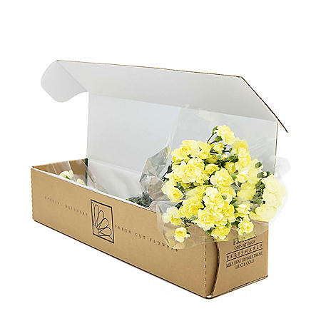 Mini Carnations, Yellow (Choose 50, 100 or 150 stems)