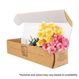 Carnations, Bi-Color (Choose 50, 100 or 150 stems)