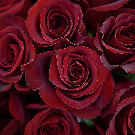 Long Stem Roses, Red (choose 50, 100 or 150 stems)