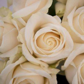 Long Stem Roses, White 55 cm (choose 50, 100 or 150 stems)