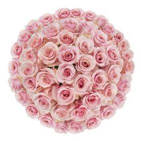 Premium Pink Roses (choose 50, 100 or 150 stems)