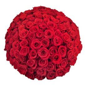 Premium Red Roses (choose 50, 100 or 150 stems)