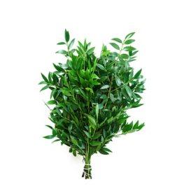 Nagi Greenery (Choose 50 or 100 stems)