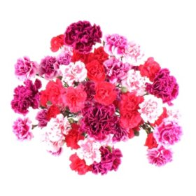 Carnation Medley (20 stems)