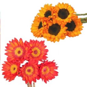 Tinted Sunflowers, Red and Orange (80 stems)