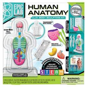 Epic Lab Human Anatomy, Clay Body Sculpting Kit