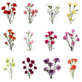 Mini Carnation, Assorted 20 stems (variety and colors may vary)