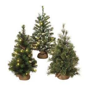 Assorted Lighted Pine Trees (Set of 3)