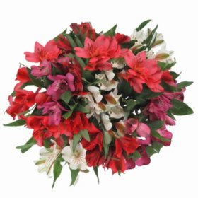 Alstroemeria, Assorted 10 stems (variety and colors may vary)