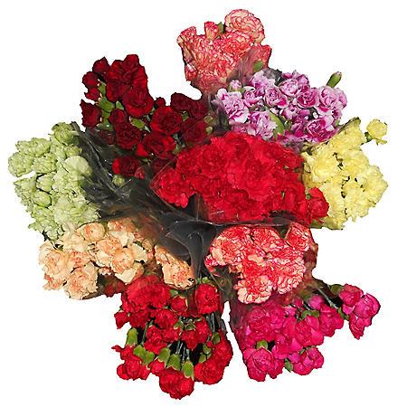 Mini Carnations - 10 Stems