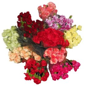 Mini Carnations - 10 Stems