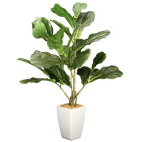 "National Tree Company 27"" Fiddle Leaf Tree in Ceramic Pot"