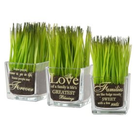National Tree Company Square Glass Pot Assortment (Set of 3)