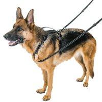 Premier Pet Multifunctional Leash