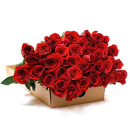 Roses, Red (200 stems)