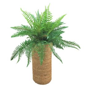 River Fern in Tall Basket