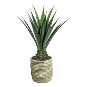"Faux Agave 42"" (Assorted Colors)"