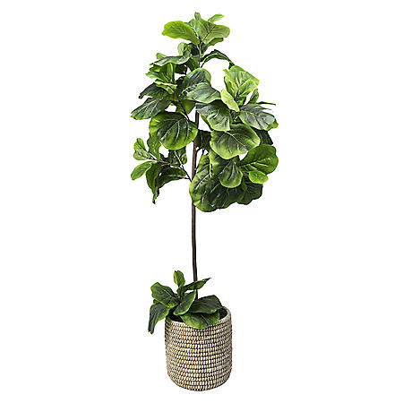 Faux 5' Fig Floor Plant