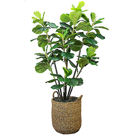 Faux 5.6' Fiddle Leaf Fig Tree