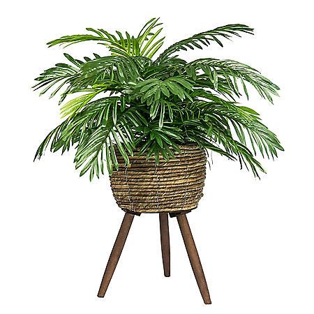 "30"" Phoenix Palm in Handwoven Tripod Stand Basket"