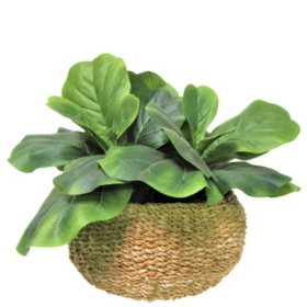 "Faux 20"" Fig Plant in Low Round Handwoven Basket"