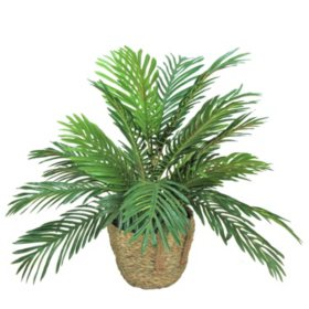 "Faux 24"" Phoenix Palm in Boho-Style Handled Handwoven Basket"