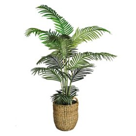 "Faux 60"" Areca Palm in Boho-Style Handled Basket"
